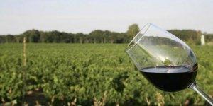en-2050-on-boira-toujours-du-vin-francais-mais-il-aura-du_3392173_1000x500