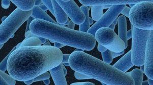 notre-maison-et-notre-corps-sont-recouverts-de-bacteries-qui-nous-suivent-partout-ou-nous-allons_67162_w460